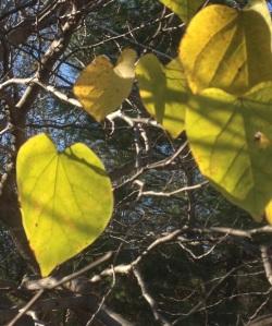 Leaves of November