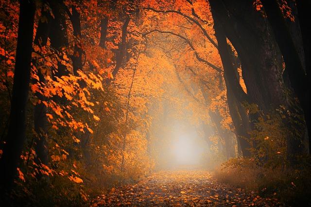 light-3130988_640